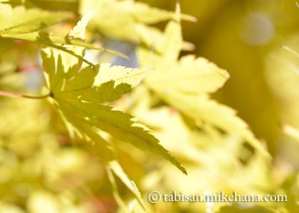 再度、東行庵の紅葉を見に・・・