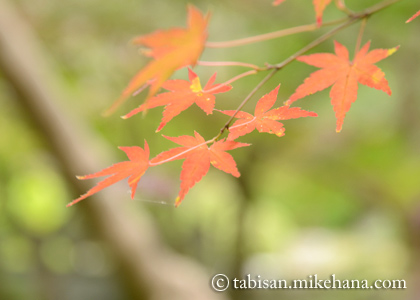 防府市の毛利氏庭園の紅葉を・・・