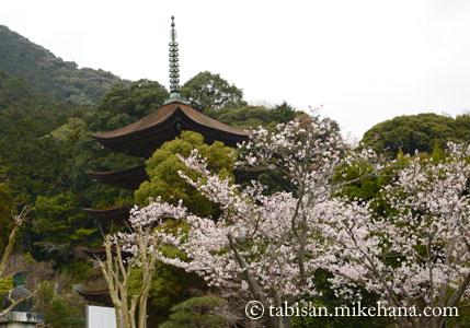 山口・香山公園の桜など・・・