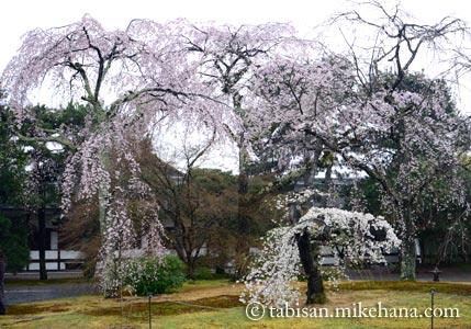 40数年ぶりの京都御苑・・・ その3
