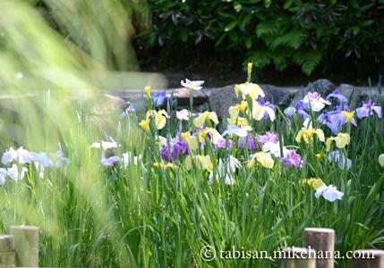 長府庭園 三の蔵から菖蒲苑へ・・・