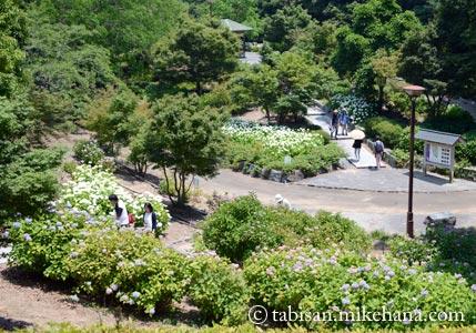 あじさい祭りが開かれている江汐公園へ・・・