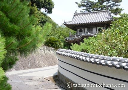 久しぶりに西円寺の青蓮を観に・・・